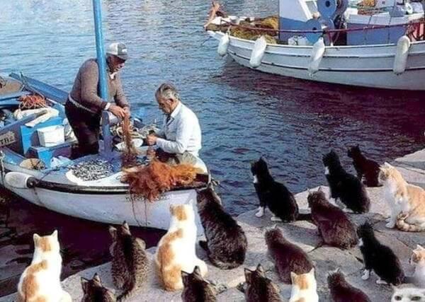 In Giappone i gatti sono amati