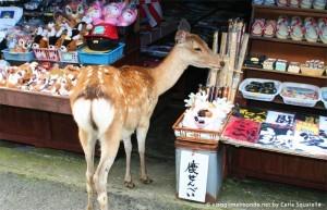 I cervi a Nara